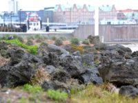 Islandsk lava ved Strandgade 93