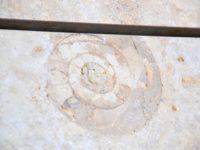 Ammonit i Operaens facadae